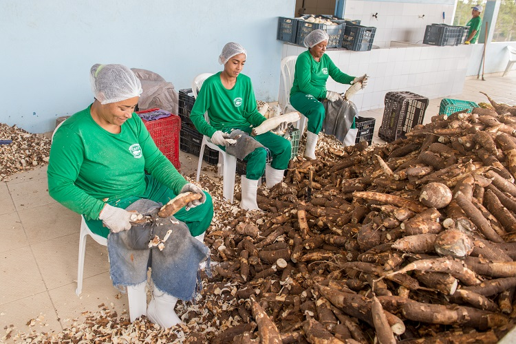 Unidade de empacotamento de farinha abre mercados para produtores na Bahia