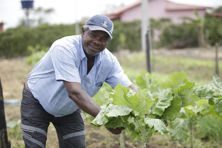 7 dicas para ajudar produtores da agricultura familiar no cultivo de alface