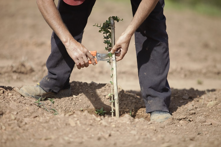 Legislação para produção e comércio de mudas e sementes passa por mudanças